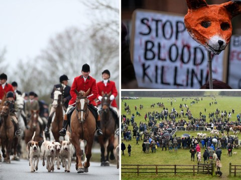 Animal rights groups condemn 'cruel Boxing Day' hunts
