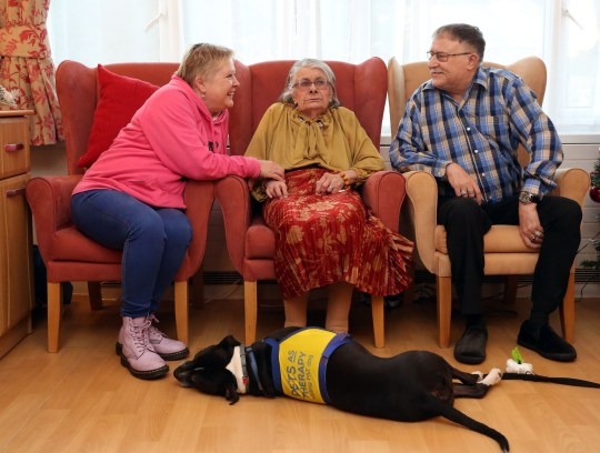LONDON, DECEMBER 3RD 2019. THERAPY DOG Dodger, the Staffordshire Bull Terrier mix therapy dog, is pictured with residents Valerie and George Cook at the George Mason Lodge care home in Leytonstone, London, December 3rd, 2019. Dodger is a regular visitor to the home as part of the Pets as Therapy initiative scheme, which aims to use dogs to help enhance residents wellbeing by calming and soothing them and preventing them from feeling isolated. Also pictured is Dodger's owner Karen Gee (far left). Photo credit: Susannah Ireland