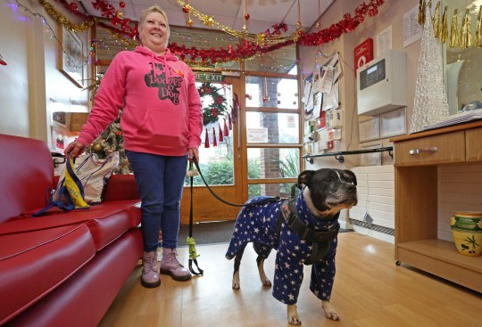 LONDON, DECEMBER 3RD 2019. THERAPY DOG Dodger, the Staffordshire Bull Terrier mix therapy dog, is pictured with owner Karen Gee at the George Mason Lodge care home in Leytonstone, London, December 3rd, 2019. Dodger is a regular visitor to the home as part of the Pets as Therapy initiative scheme, which aims to use dogs to help enhance residents wellbeing by calming and soothing them and preventing them from feeling isolated. Photo credit: Susannah Ireland