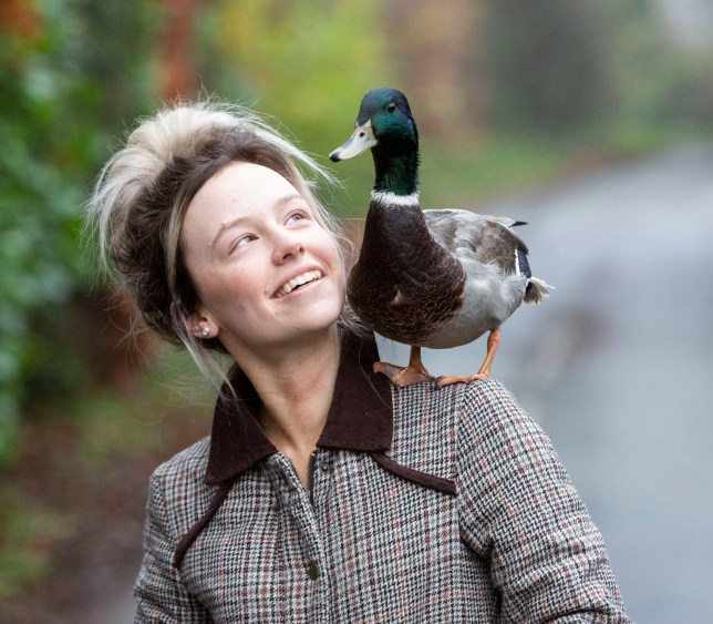 Hand reared rescued duckling hardly leaves woman's side