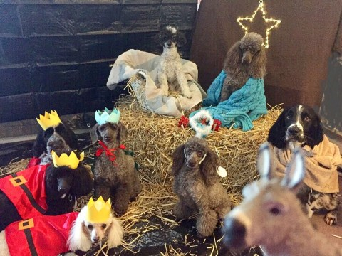 Eight dogs pose for a nativity scene to capture 'the real essence of Christmas'