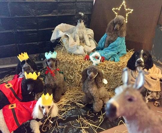 dog nativity scene