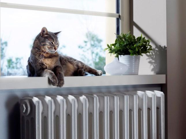 Cat sleeping on the heater