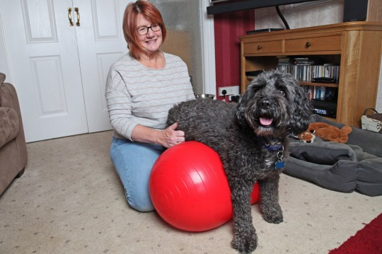 Jean Stork, 63, from Kings Lynn, Norfolk, and Zippy, 7, a cockapoo