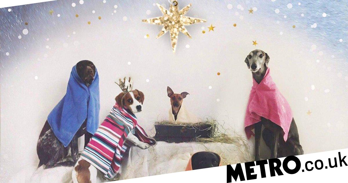 Kennel worker gets dogs to pose for nativity scene Christmas card