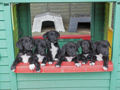 Puppies named after the seven dwarfs get adopted in time for Christmas
