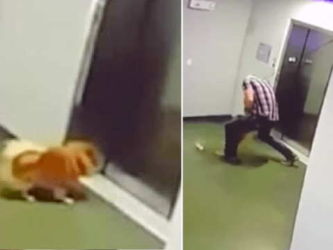 Heart-stopping moment Pomeranian was almost decapitated by elevator