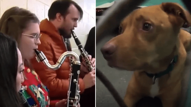 Photo of student musicians playing at shelter while dog in shelter watches