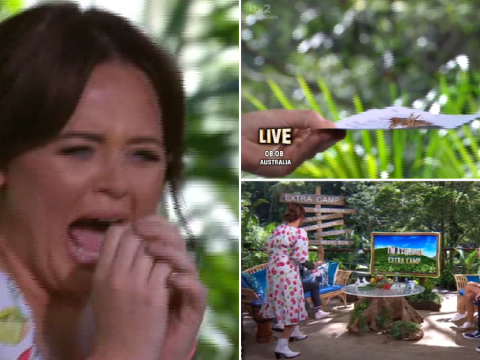 I'm A Celebrity Extra Camp descends into chaos as cricket invades set bringing show to standstill