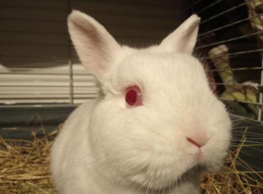 Snowy the rabbit