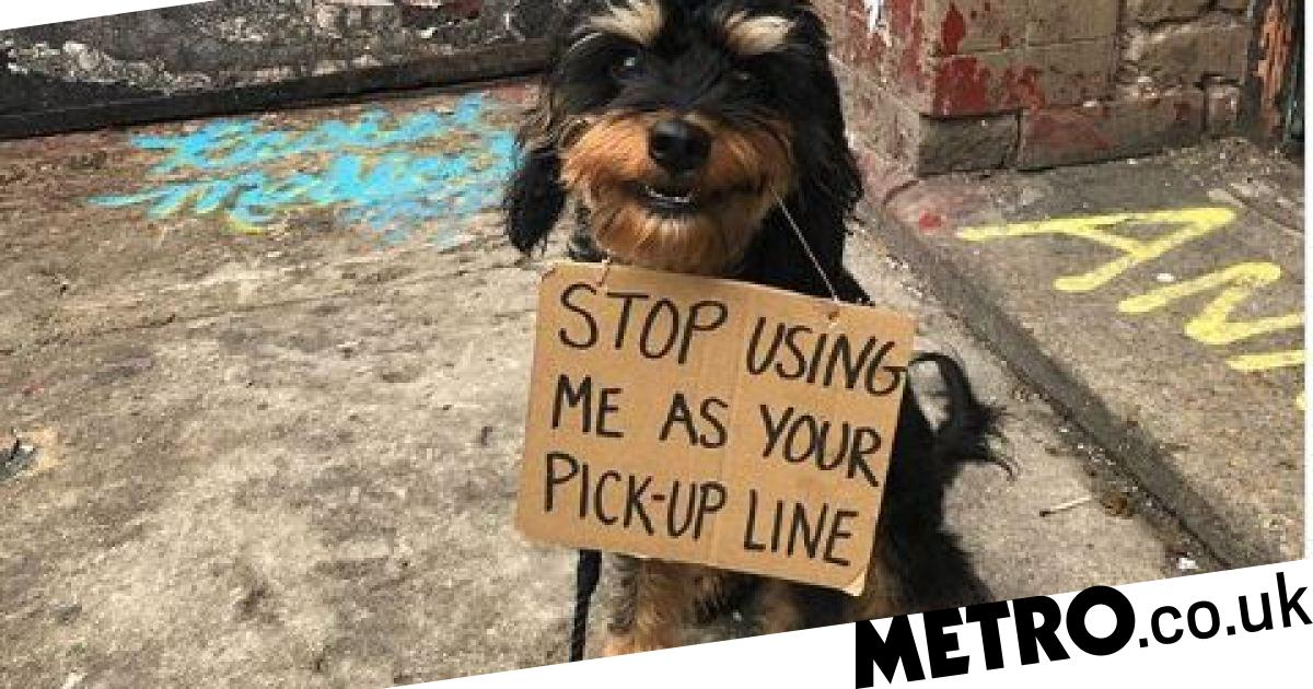 Dog with a sign protests all the annoying things done to her