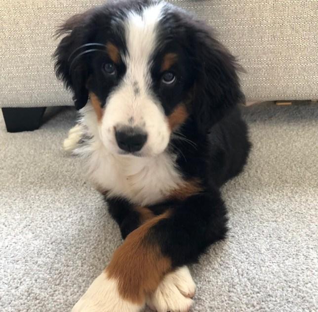 11-week old puppy Luna