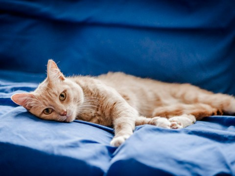 Attention Londoners: Blue Cross needs people to look after cats and kittens
