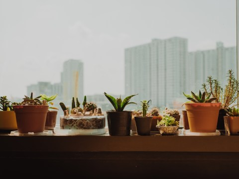 I got into houseplants because they looked good on Instagram, but now I'm hooked for life