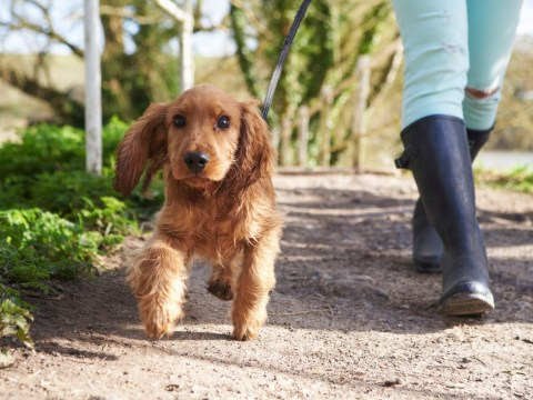You might be rushing your dog too much when you take them for a walk