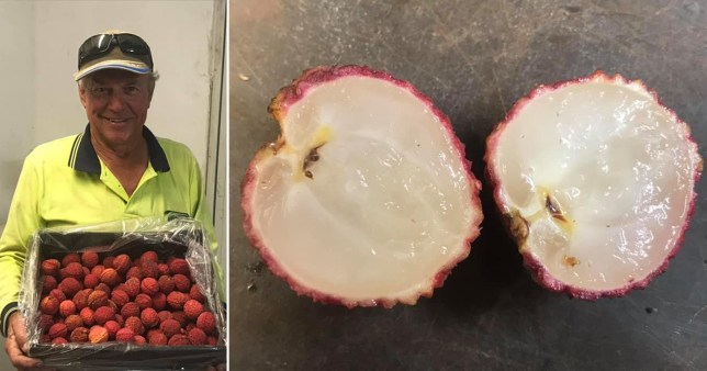 The man who created seedless lychees on one side, holding his lychees, and a seedless lychee cut open on the other side