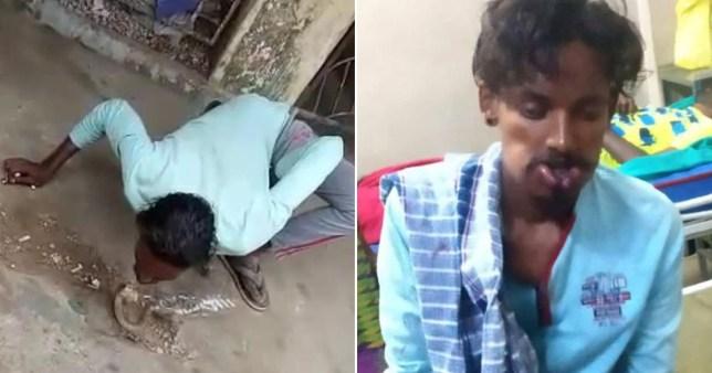 Cobra bit snake charmer in face when he drunkenly tried to kiss it
