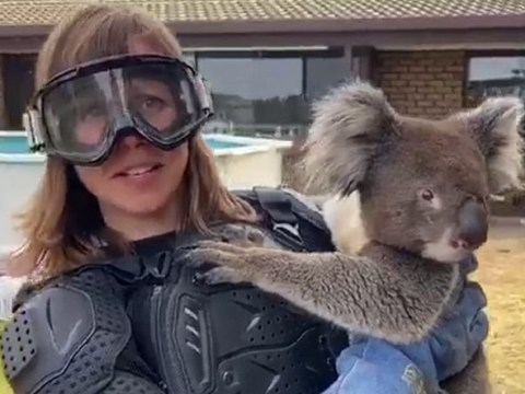 ITV News reporter tricked into wearing body armour to hold a koala
