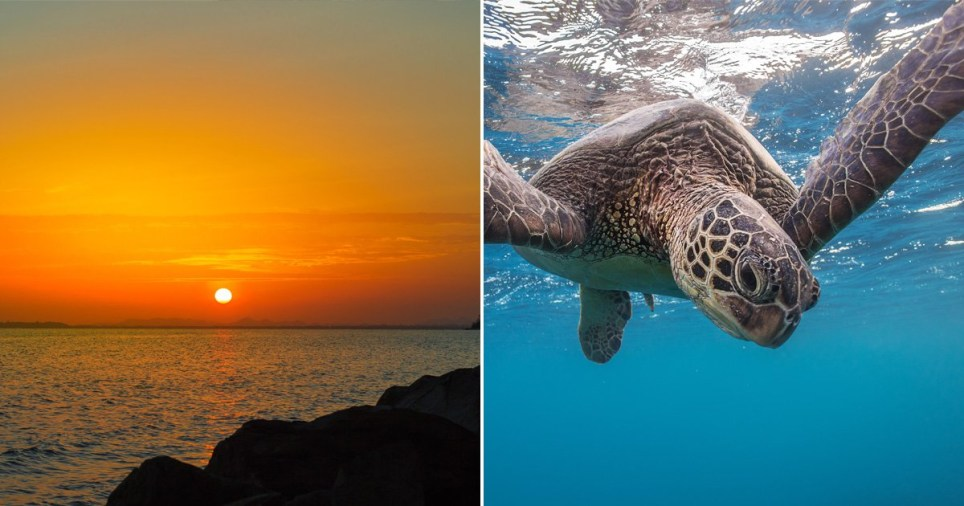 Sunset and sea turtle
