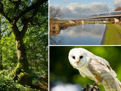HS2 'will damage 108 woodlands causing some species to go extinct'