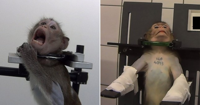 A video exposing animal cruelty at a German testing lab sparked international outrage in October last year
