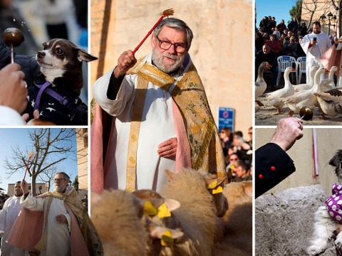 Confused-looking pets blessed with holy water for traditional Spanish festival