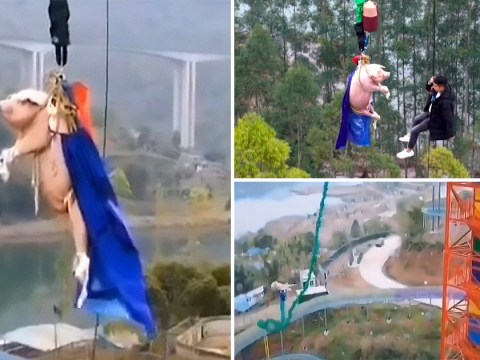 Pig forced to bungee jump from 223ft tower at theme park in China