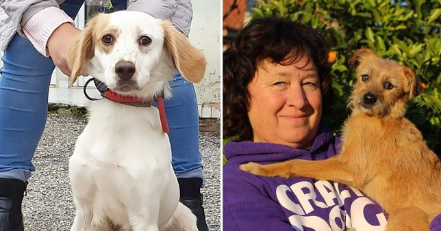 Raymond, an 11-month-old setter/spaniel mix up for adoption from Zante with the help of UK registered non-profit Healing Paws Animal Rescue and founder Sue Deeth
