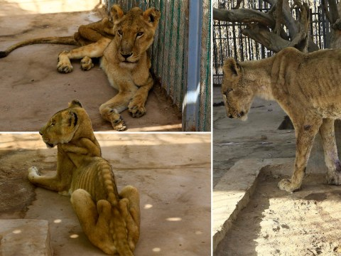 Zoo staff left with no option but to use own cash to feed animals