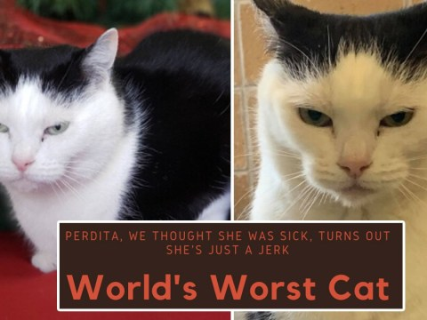'She's just a jerk' – world's worst cat up for adoption
