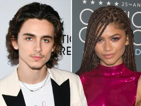 Timothée Chalamet and Zendaya shopping together at Bed Bath and Beyond is actually pretty cute