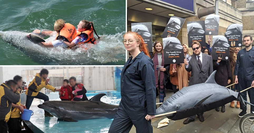 Dolphin cruelty