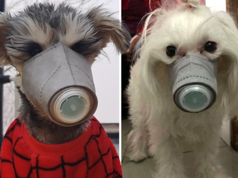 Dog owners buying face masks to protect pets from deadly coronavirus