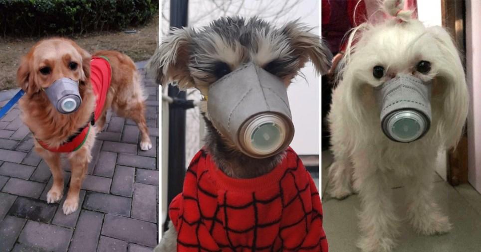 Dog masks being sold in Beijing, China, to protect against Coronavirus