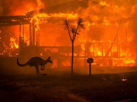 Nearly 500,000,000 animals have been killed in Australia's wildfires