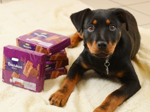 Puppy almost killed after eating two packs of bourbons
