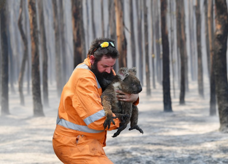 epa08109254 Adelaide wildlife rescuer Simon Adamczyk holds a koala he rescued at a burning forest near Cape Borda on Kangaroo Island, Australia, 07 January 2020. A convoy of Army vehicles, transporting up to 100 Army Reservists and self-sustainment supplies, is on Kangaroo Island as part of Operation Bushfire Assist at the request of the South Australian Government. EPA/DAVID MARIUZ AUSTRALIA AND NEW ZEALAND OUT
