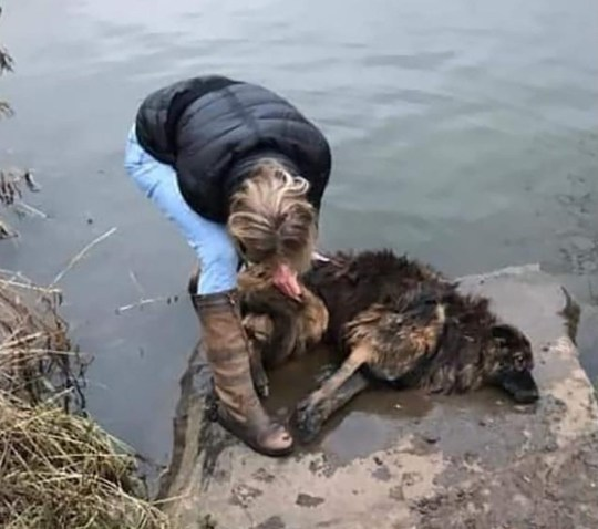07/01/2020: Picture shows Jane Harper of Newark, Notts, rescuing a drowning dog whose lead had been tied to a rock and thrown in the River Trent. The animal, whose name was recorded on her microchip in 2010 as Bella, was taken to a vet where she is recovering. A 31-year-old woman and a 32-year-old man arrested on suspicion of animal cruelty offences have been released under investigation. Jane has been praised for her brave actions for pulling the dog out of the river. See Raymonds copy 07407 763529 / 07407 358364