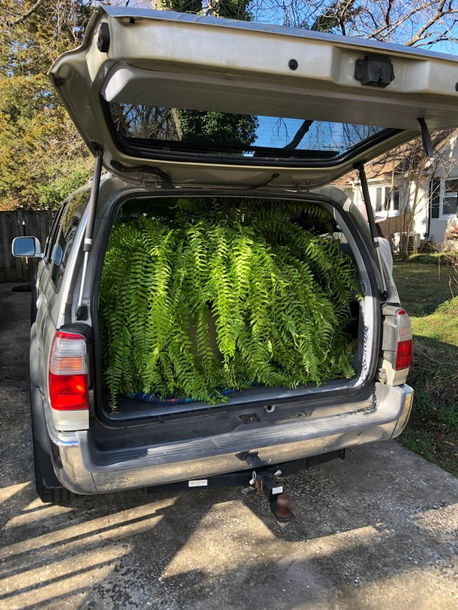 Person buys 'large fern' and ends up with this menacing plant that might take over their home