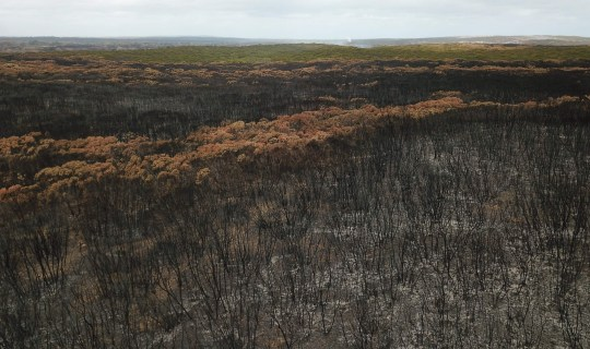 An aerial photo taken on January 16, 2020 shows a fire damaged landscape on Kangaroo after bushfires ravaged the island off of the south coast of Australia. - Australia is reeling from bushfires that since September 2019 having claimed 28 lives, including two on Kangaroo Island, and razed 10 million hectares (100,000 square kilometres) of land -- an area larger than South Korea or Portugal. (Photo by PETER PARKS / AFP) / TO GO WITH Australia-livestock-fire-environment,FOCUS by Holly ROBERTSON (Photo by PETER PARKS/AFP via Getty Images)