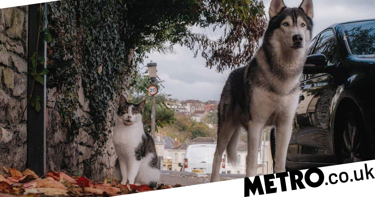Cat and dog love to go on walks together