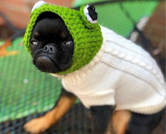 Dog's underbite makes him look permanently grumpy