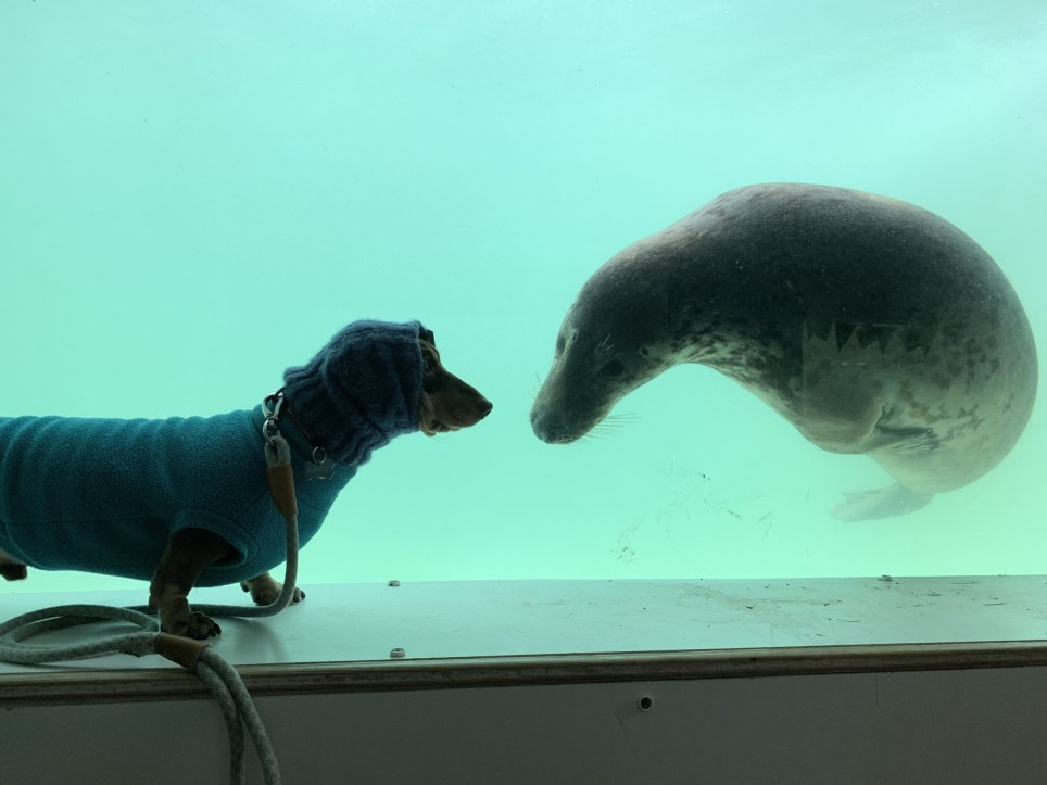 Aayla the seal and sausage dog Stanley formed an instant connection