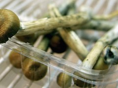 Single dose of magic mushrooms can improve mental health of cancer patients