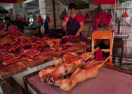 This picture taken on June 17, 2015 shows a butcher preparing cuts of dog meat for sale in Yulin, in southern China's Guangxi province. People from Yulin traditionally celebrate the solstice during midsummer on the longest day of the year by eating dog meat and lychee fruit, which draws criticism from animal rights activists. CHINA OUT AFP PHOTO (Photo credit should read STR/AFP via Getty Images)