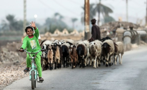 "An Egyptian child waves in greeting as he bikes past a herd in the village of al-Nehaya, one of the poorest in the country, in the province of Assiut in central Egypt, on November 16, 2019. - The name of the remote Egyptian village Al-Nehaya sounds much like the Arabic word for ""the end"", which is sadly fitting given the grinding poverty endured by most of its people. (Photo by Mohamed el-Shahed / AFP) (Photo by MOHAMED EL-SHAHED/AFP via Getty Images)"
