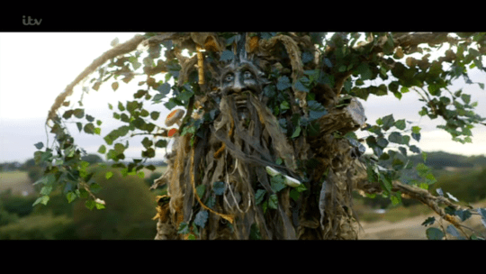 The Tree contestant