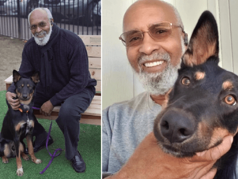 Grieving dog owner cremated dead dog…then found out his pet was still alive