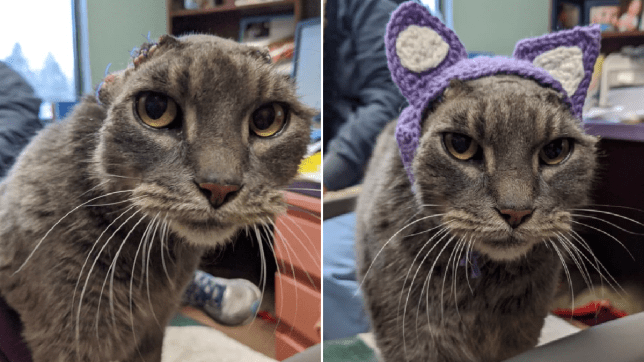 Photos of Lady the stray cat with and without her new knitted ears