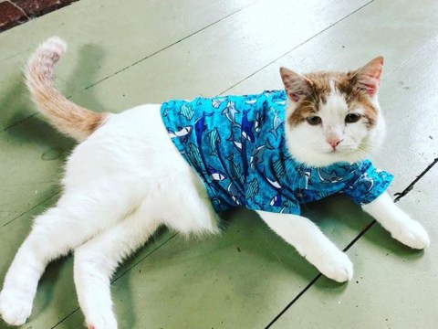 Cat with Ehlers-Danlos syndrome finds loving home with researcher who has the same condition
